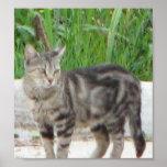CAT IMPRESIONES