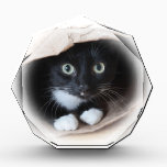 """Cat in a bag award<br><div class=""""desc"""">Black and white cat playing in a paper bag</div>"""