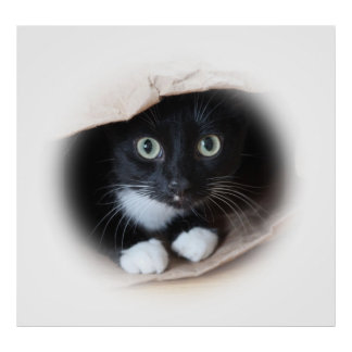 Cat in a bag poster
