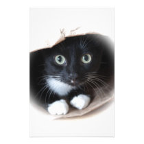 Cat in a bag stationery