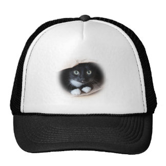 Cat in a bag trucker hat