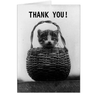Cat in a Basket Vintage Photo | Thank You Card
