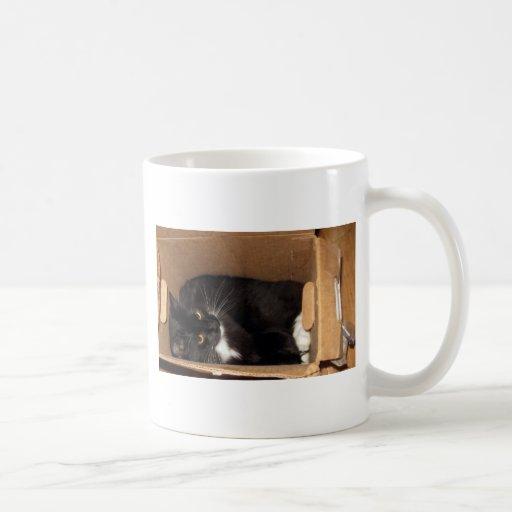 Cat in a Box - Photograph Coffee Mug
