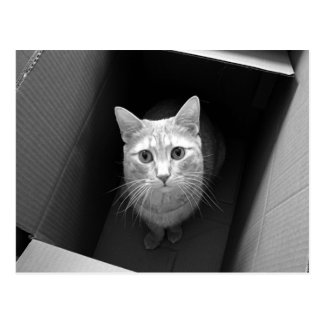 Cat in a Box Postcards