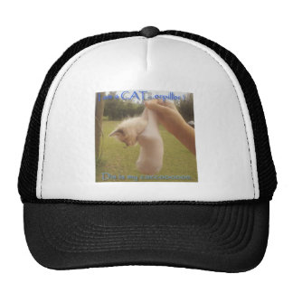 Cat in a cacoon trucker hat