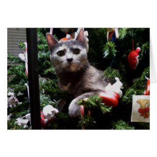 Cat in a Christmas Tree Card