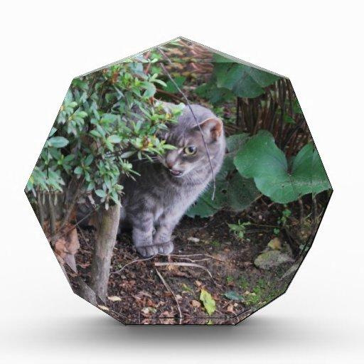 cat in a garden award