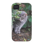 cat in a garden iPhone 4 covers