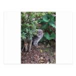 cat in a garden postcard