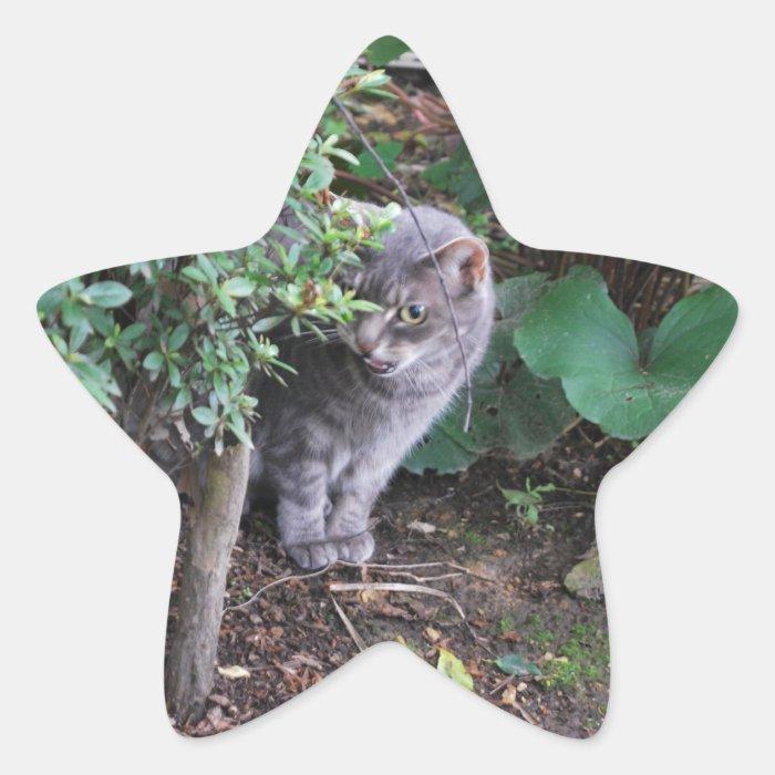 cat in a garden star sticker