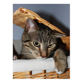 Cat in a hamper postcard