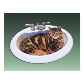 Cat in a Sink Postcard