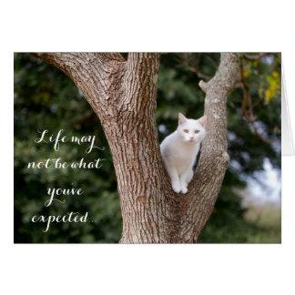 Cat in a Tree Notecard