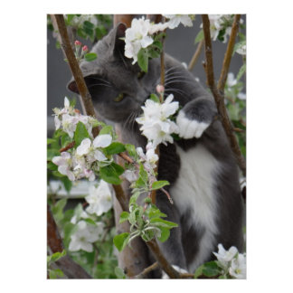 Cat in an apple tree poster