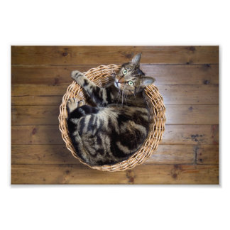 Cat in Basket Photograph
