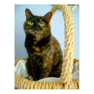 cat in basket postcard