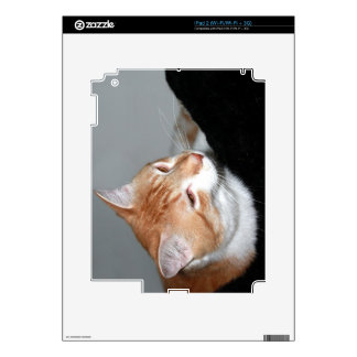Cat in bed skin for iPad 2