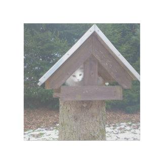 Cat In Birdhouse Gallery Wrap