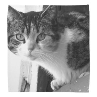 Cat in black and white bandana