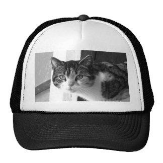 Cat in Black and White Cap Trucker Hat