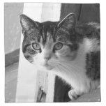 Cat in black and white cloth napkins