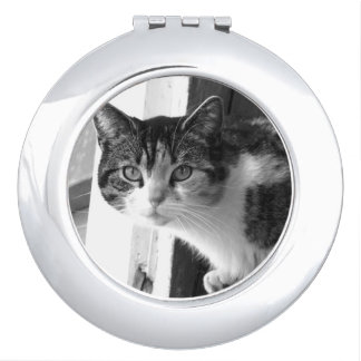 Cat in black and white mirror for makeup