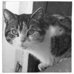 Cat in black and white napkin