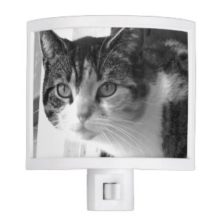 Cat in black and white night light