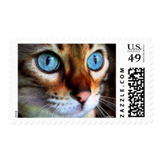 Cat in blue postage