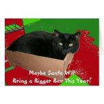 black, cat, box, funny, christmas, red, green,