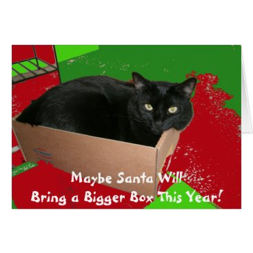 Christmas Themed Cat In Box Christmas Card