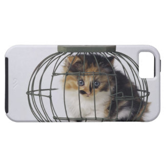 Cat in cage iPhone SE/5/5s case