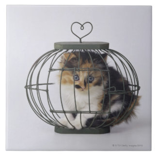 Cat in cage large square tile