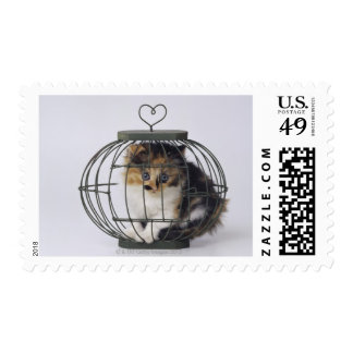 Cat in cage postage