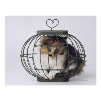 Cat in cage postcard