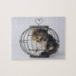 Cat in cage puzzles