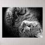 Cat in darkness print