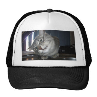 Cat_In_Face_First_Drinking_From_Tap, _ Gorros Bordados