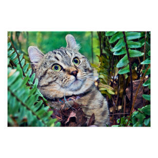Cat in Ferns and Leaves Poster