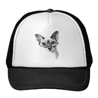 Cat in glasses trucker hat