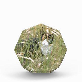 cat in Grass Acrylic Award