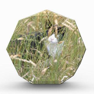 cat in Grass Award