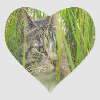 cat in grass hide and seek peace and joy heart sticker
