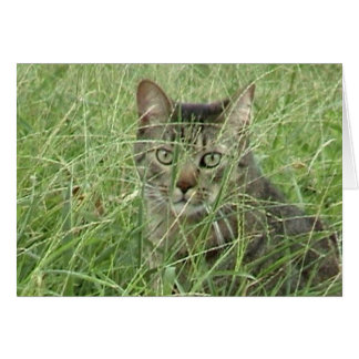 Cat in Grass III Card