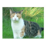 Cat in grass post card