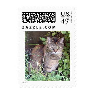 Cat in Grass Postage Stamp