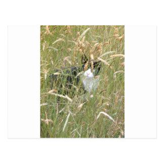 cat in Grass Postcard