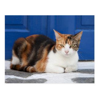 Cat in Greece Postcard