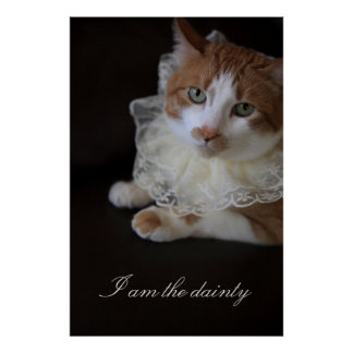 Cat in lacy collar poster