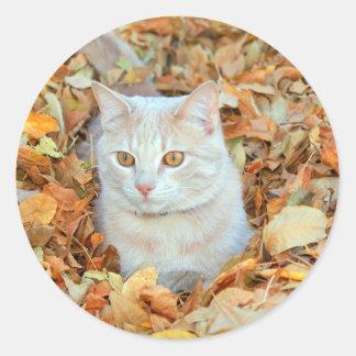 Cat in leaves classic round sticker